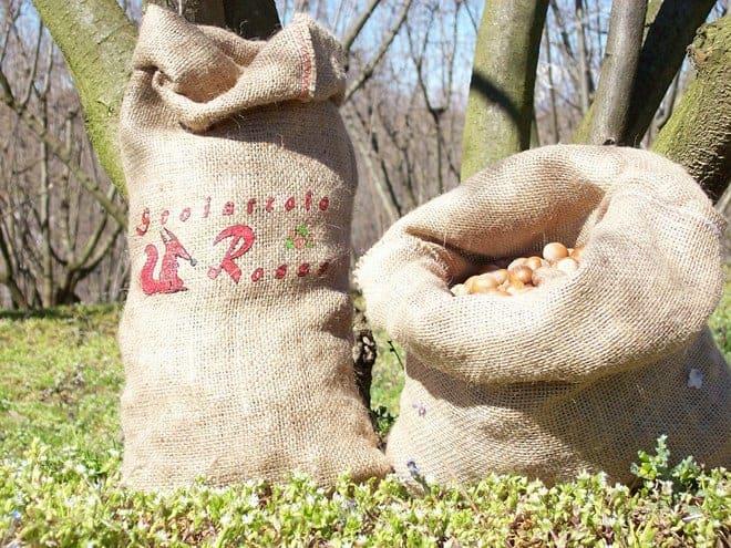 Nocciola piemonte igp in guscio confezionata in sacco di juta vendita diretta online azienda agricola Scoiattolo Rosso