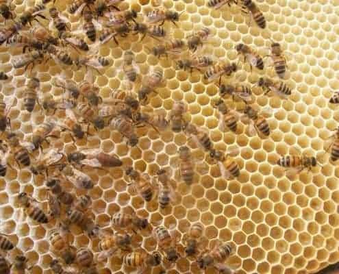 Apicoltura scoiattolo produzione vendita miele italiano